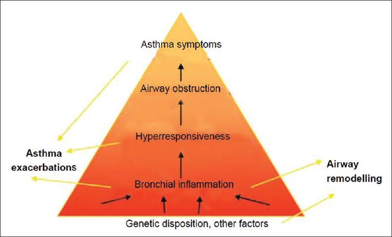 Figure 1: The relationship between asthma pathophysiologies